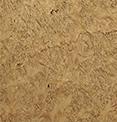Стеновые панели Дуб корень